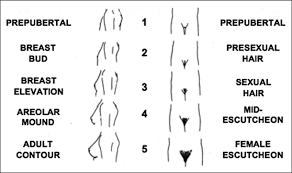 long and straight female pubic hair stages of breast and pubic hair development stage 1 is