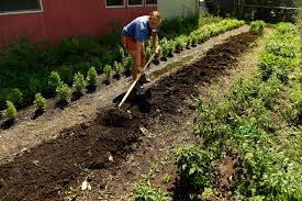 there u0027s still time to plant veggies this fall here u0027s what will do