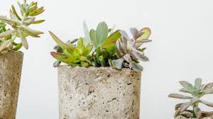 new succulent planters mulhall u0027s