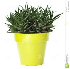 Cute Plant by Green Plant Pot 116 Cute Interior And Green Plant In Pot Rseapt