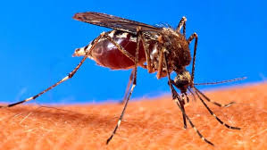Flies In Backyard How To Keep Mosquitoes Out Of Your Yard Angie U0027s List