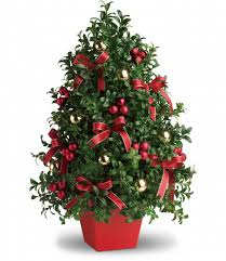 boxwood christmas tree blossomflower com