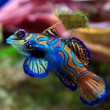 aquarium fishes price india to buy aquarium fishes inexpensively