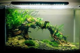 Fluval Edge Aquascape The Fluval Spec V Monsterfishkeepers Com