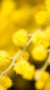 Esszimmerst Le Yellow Die Besten 25 Iphone 6 Flower Wallpaper Ideen Auf Pinterest