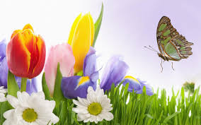 hd quality spring flowers 24 wallpaper widescreen siwallpaper