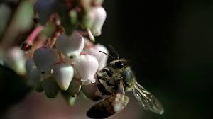 Native Plant Nursery Los Angeles Ca Water Wise U0027 Versus U0027drought Tolerant U0027 What Does All The