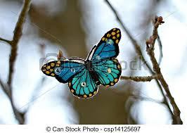 blue butterfly on a branch stock photographs search photo clip