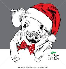 christmas pig stock images royalty free images u0026 vectors