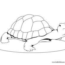 cute turtle coloring pages hellokids