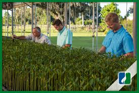 florida native nursery plant city fl nursery u2013 sandhill native growers