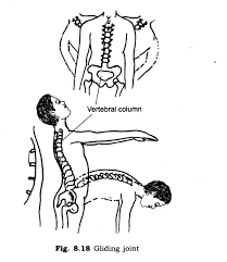 ncert solutions for class 6th science chapter 8 body movements