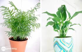 benefits of houseplants the breathtaking benefits of houseplants one good thing by jillee