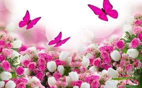 wallpapers flowers hd rose 80