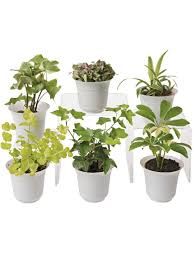 Small Low Light Plants | low light terrarium plant collection small terrarium plants for sale