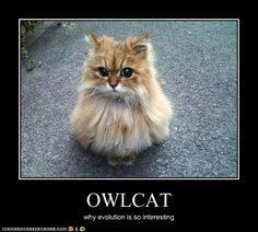 Owl Birthday Meme - pin by donna cox on kittens and cats pinterest baby animals