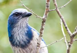 grow these native plants so your backyard birds can feast audubon
