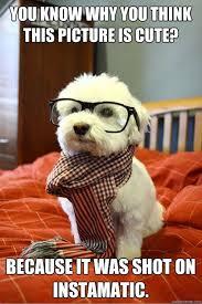 Hipster Dog Meme - 22 best hipster dog images on pinterest adorable animals animals