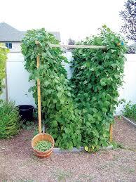 exterior gorgeous winning homemade garden trellis ideas for