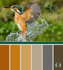 25 best nature u0027s color palettes images on pinterest colors