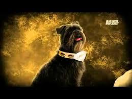 affenpinscher animal planet dogs 101 affenpinscher youtube