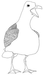 31 best gaivotas seagulls images on pinterest animals bird
