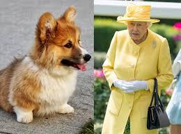 queen elizabeth dog the dog of queen elizabeth ii is dead is zdruzgotana