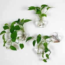 awesome wall plants indoor images interior design ideas