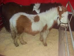 Christmas Crib 3 U2013 Hungry Horse Outside