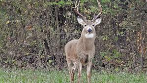 Reflective Deer Blind Science Of Deer Vision Outdoor Channel
