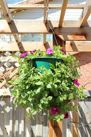 how to plant a professional looking hanging flower basket