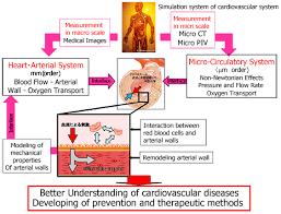 the cardiovascular system diagram human anatomy chart