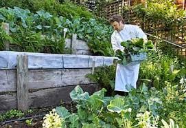 Steep Sloped Backyard Ideas How To Build A Terrace Garden Planet Natural