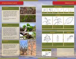 vegetaion images Samburu vegetaion guide jpg