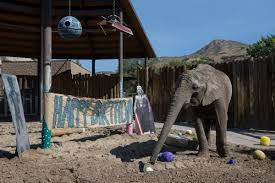Zoo Lights Salt Lake City by Utah U0027s Hogle Zoo Celebrates Elephant U0027s Birthday Touts
