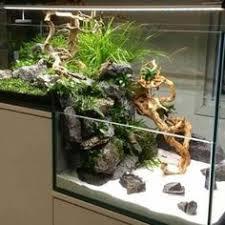 Small Tank Aquascaping Aquarium Little Dream D261dbbb318529e5e90a8f8931d9d794 Jpg 1 024