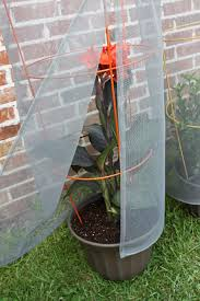 33 best plants for birds amazon com tomato screen plant protector garden u0026 outdoor