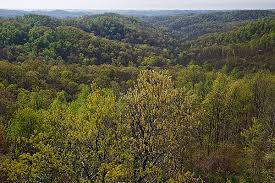 Ohio forest images Picture ohio spring around the buckeye state shawnee state forest jpg