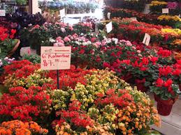 los angeles florist 12 fashionable flower shops botany boutiques for s day blooms