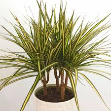 9 low risk high reward indoor plants u2014 swansons nursery