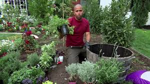 herb gardens tips herb gardening video hgtv