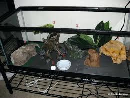 terrarium tank u2013 salmaun me