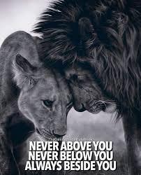 25 lioness quotes ideas lion lioness