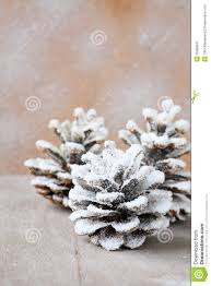 pine cones covered with artificial snow royalty free stock
