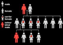 Colour Blind Percentage Color Blindness Biologypop