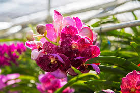 bai orchid and butterfly farm at chiang mai stock photo