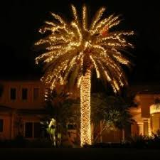 lighted palm christmas tree light photo gallery