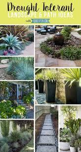 Arizona Landscaping Ideas For Small Backyards Drought Tolerant Landscape U0026 Path Ideas Drought Tolerant