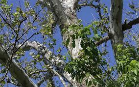 trees quiz the nature conservancy