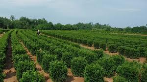 plant availability